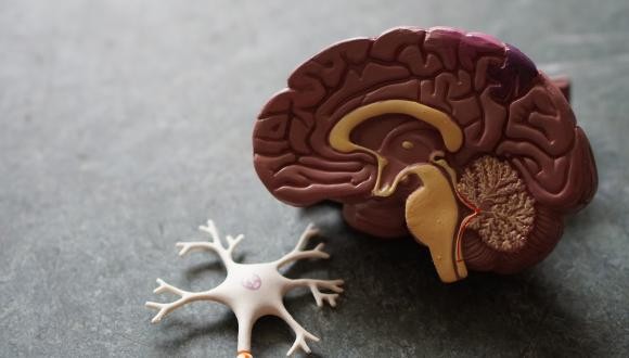 Seminar: Why have we failed to cure Alzheimer Disease?